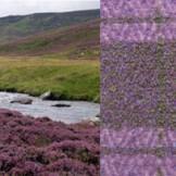 jennifer jones scotland textile inspiration